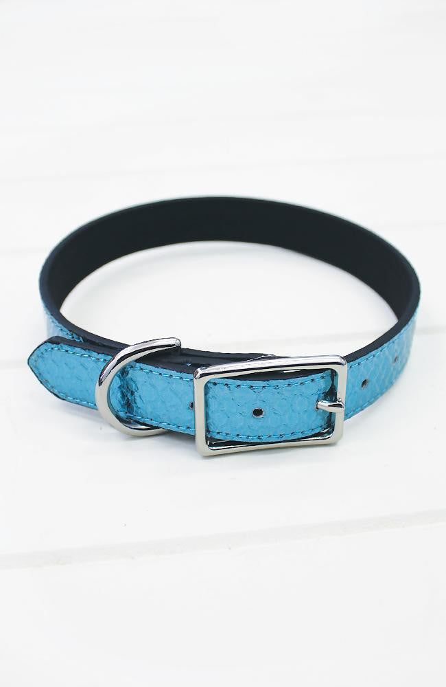 blue crocodile dog collar
