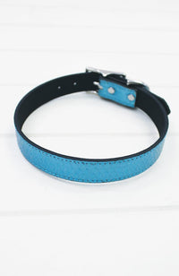 blue metallic crocodile vegan leather fashion dog collar