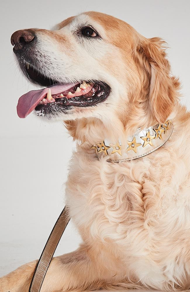 silver with gold stars dog collar