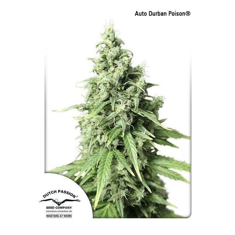 Auto Durban Poision (3) - Dutch Passion