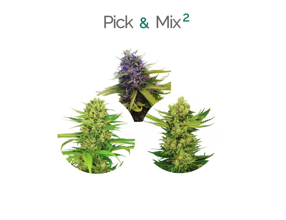 PICK AND MIX 2