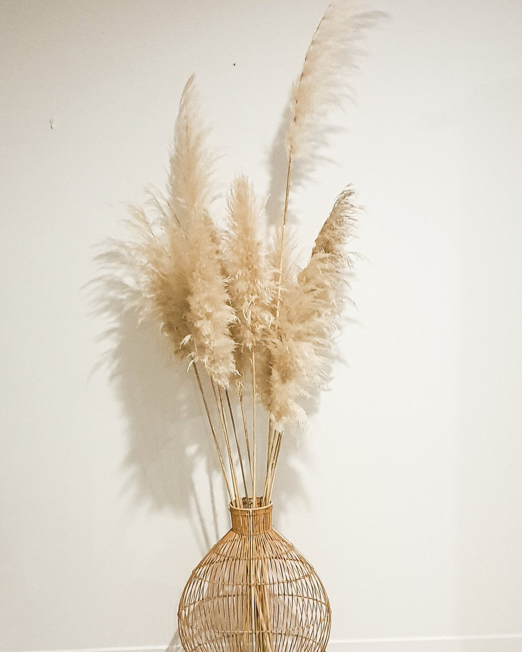 Extra long natural pampas stem - Three Nines Boutique
