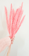 Pampas grass. Thin pink natural stem. - Three Nines Boutique