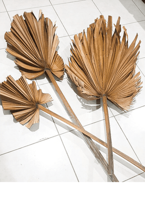 Long stem dried palm fronds - Three Nines Boutique