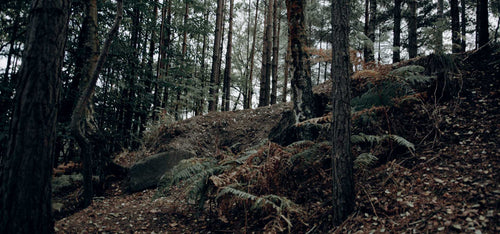 forest woods luts