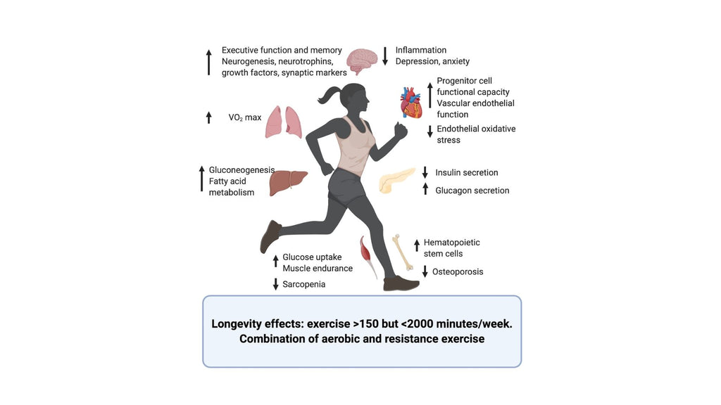 Exercise and oxidative stress: how to balance the pros and cons.