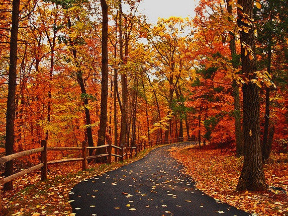 Your interactive guide to the Fall Foliage this year