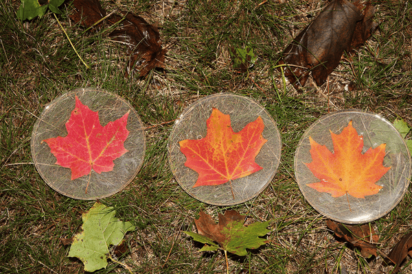 Circle Maple Leaf Coasters