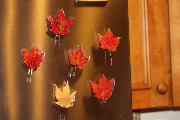 Maple Leaf Magnet