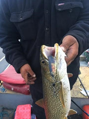 Huge Lake Trout Caught on Our Burbot Wounde Rattle Shad