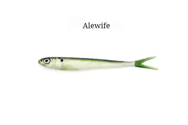 "7"" Alewife realistic soft plastic lure"