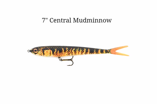 "7"" Central Mudminnow realistic soft plastic lure"