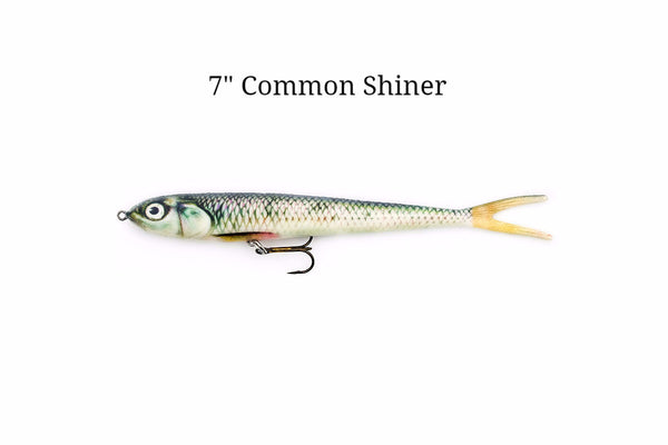 "7"" Common Shiner realistic soft plastic lure"