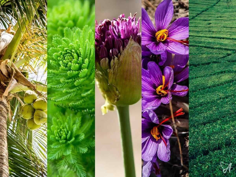 Ageless Gifts – Ancient Natural Remedies that Made it to the 21st Century