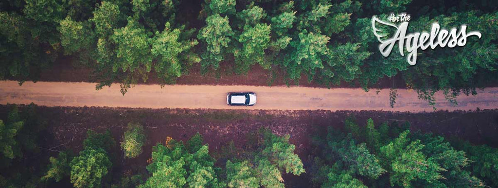 Car driving through forest