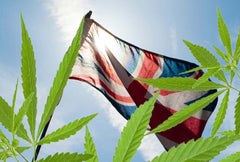 Is Cannabis Oil Legal in the UK
