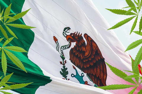 Mexico Flag cannabis