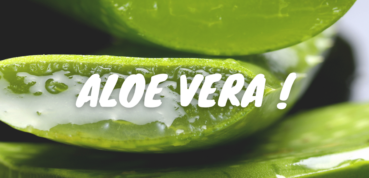 Aloe Vera Juice – More than what you ask for!