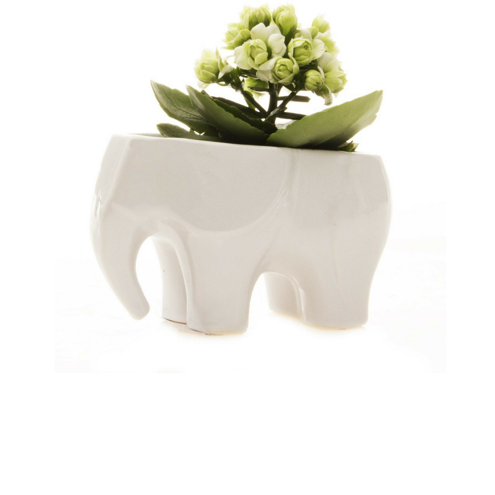 Elephant Planter (more colors)