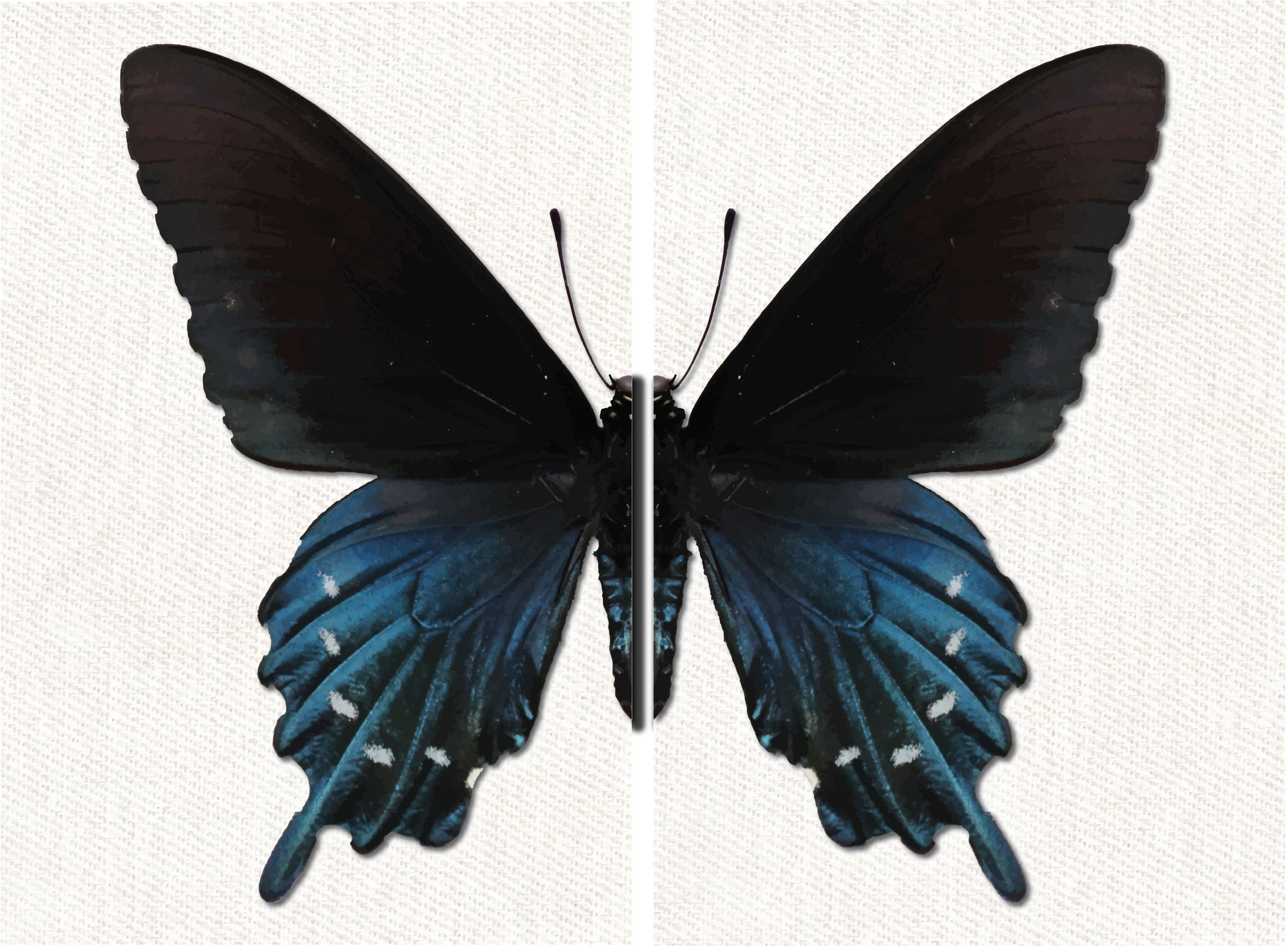 Flutterby Side by Side Art Print