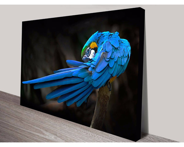 Blue Macaw Wall Art Impact Imagery Dunn Furniture - Online Office Furniture for Brisbane Sydney Melbourne Canberra Adelaide