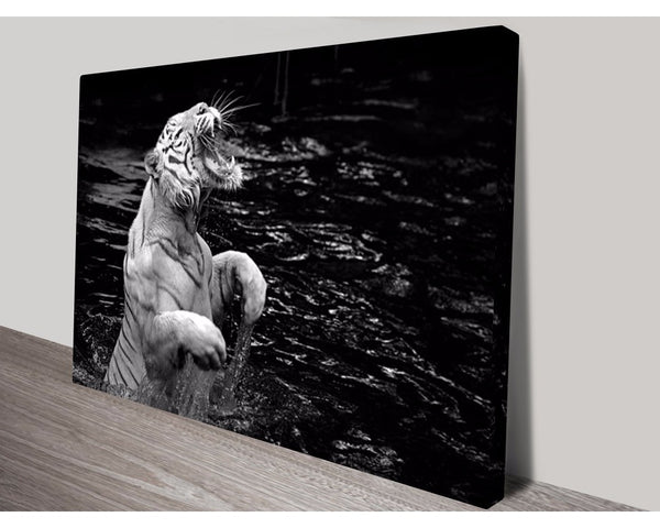 Roar Of The Tiger Wall Art Impact Imagery Dunn Furniture - Online Office Furniture for Brisbane Sydney Melbourne Canberra Adelaide