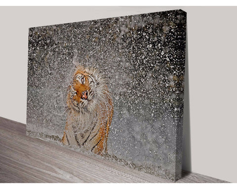 Tiger Splash Wall Art Impact Imagery Dunn Furniture - Online Office Furniture for Brisbane Sydney Melbourne Canberra Adelaide