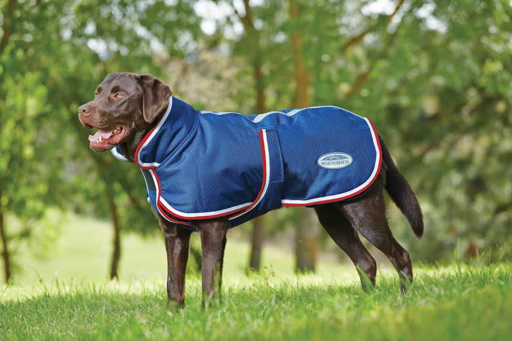 Top 5 dog coats this Winter