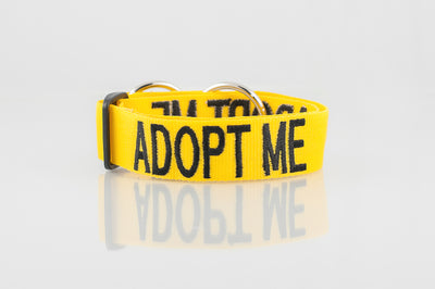 Adopt Me Dog Collar Yellow