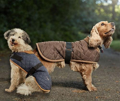 Gor Pets Water Resistant Worcester Quilted Dog Coat
