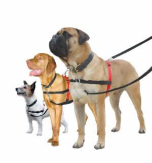 Halti Dog Harness Designed To Stop Pulling