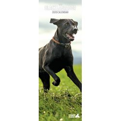 Black Labrador Slim Dog Calendar