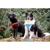 Dog Harness Comfort Collection