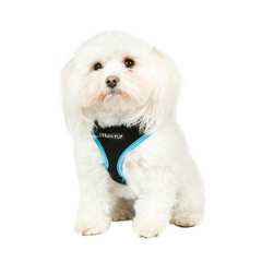 Active Mesh Neon Blue Dog Harness