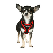 Active Mesh Neon Red Dog Harness