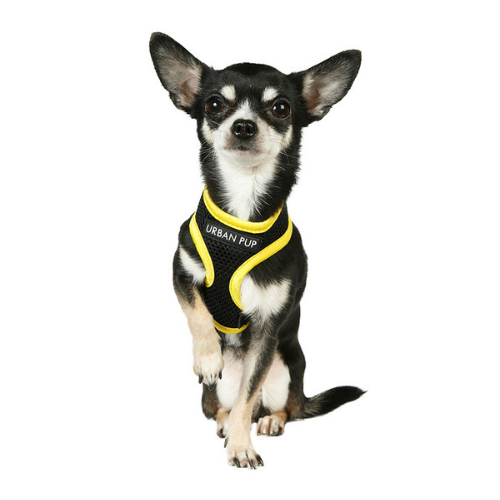 Active Mesh Neon Yellow Dog Harness