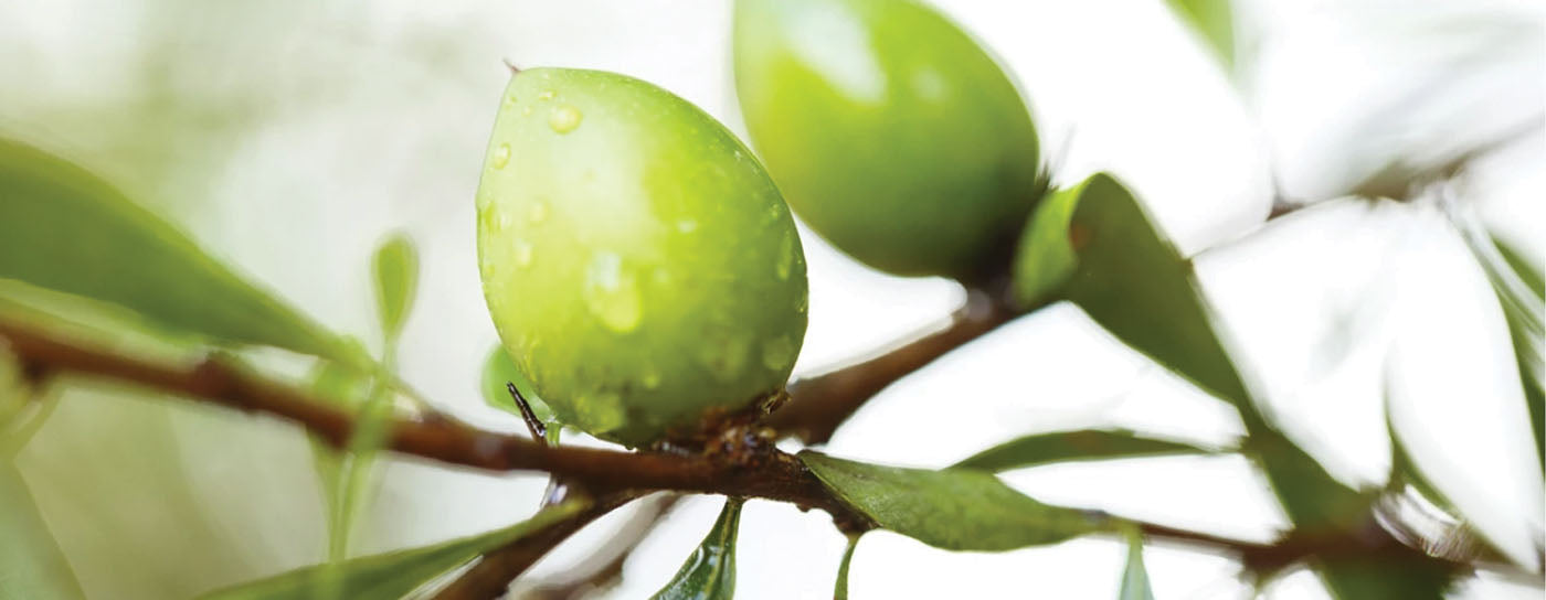 Five Awesome Components of Argan Oil