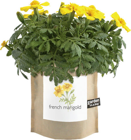 Garden in a Bag - French Marigold