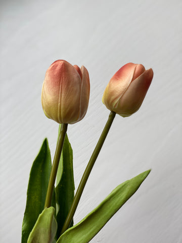 Tulip Stem - Pink/Yellow Gradient