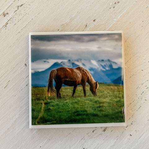Horse Grazing in Pasture Coaster