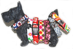 Check out our new collars!