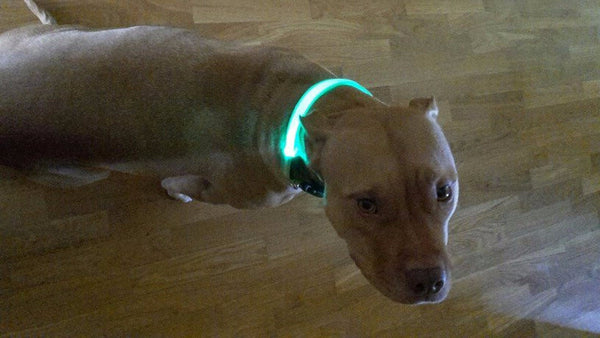 Sensational Safety LED Dog Collar Free + Shipping
