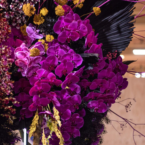Melbourne florist Flowers Vasette display at Melbourne International Flower and Garden Show 2019 bright purple orchids