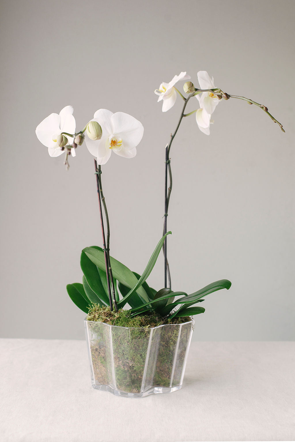 Phalaenopsis Orchids in Deco Inspired Glass Vase