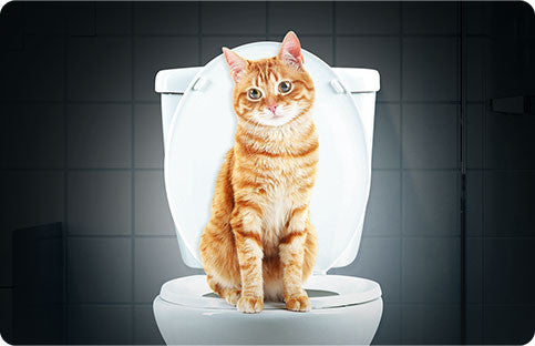 How To Toilet Train My Cat?