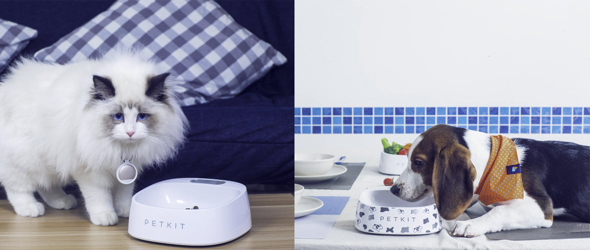 Energetic Pet Dog Cat Fit Weighing Scale Food Bowl Non-slip Pet Bowl No Spill Anti-bacteria Abs Home & Garden