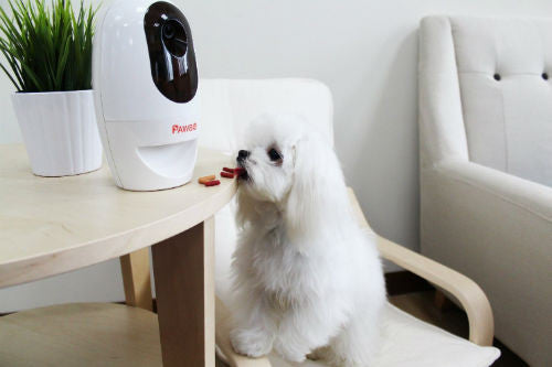 Pawbo Smart Pet Camera Eating