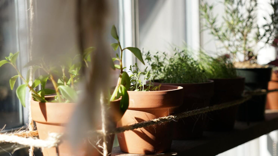 18 Gardening Tips For Beginners In India
