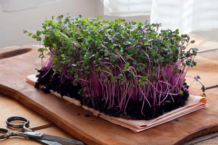 How to Grow Microgreens at Home | Ultimate guide for The Indian ...