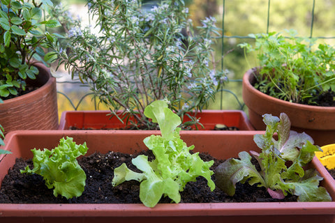 Basic Requirements For Terrace Gardening